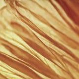 Papaver da flor 189 da papoila Imagem de Stock