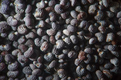 Papaver seco da papoila de ópio das sementes - somniferum pelo microscópio Opiáceo narcóticos, da droga e planta de alimento Fotos de Stock