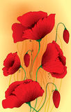 Papaver somniferum poppy flowers Royalty Free Stock Photos