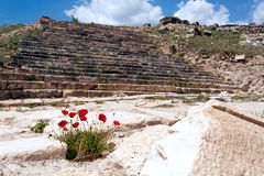 Papaverbloemen in Pamukkale Royalty-vrije Stock Foto