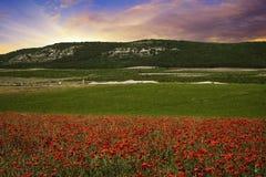 Papavergebied met bergen Royalty-vrije Stock Afbeelding