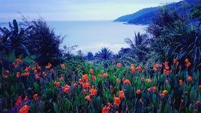 Papaveri accanto al mare in Da Nang Vietnam fotografia stock