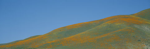 Papaveri di California e Wildflowers, vicino a Gorman, California Fotografia Stock Libera da Diritti