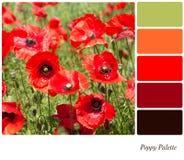 Papaveri di estate - tonalità di rosso Fotografia Stock Libera da Diritti