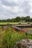 Papaveri di maggio alla villa romana a Echternach, Lussemburgo fotografie stock libere da diritti