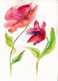 Papaveri di rosso dell'acquerello Royalty Illustrazione gratis