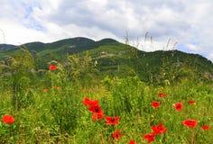 Papaveri di rosso della montagna di estate immagini stock