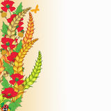 Papaveri e cereale Illustrazione Vettoriale