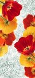 Papaveri e ciliege di fioritura dei tulipani Immagine Stock