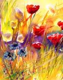 Papaveri, fiori, illustrazione di stock