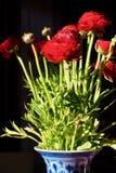 Papaveri rossi Fotografia Stock