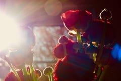 Papaveri rossi Fotografia Stock Libera da Diritti