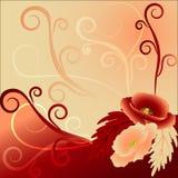 Papaveri rossi e beige Fotografie Stock Libere da Diritti