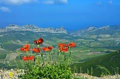 Papaveri sopra Patrimonio, Corsica fotografia stock libera da diritti