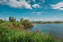 Papaveri su un lago Fotografia Stock Libera da Diritti