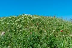 Papavero di rosso della natura del paesaggio Fotografie Stock Libere da Diritti