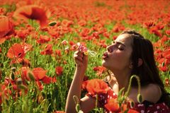 Papavero, giornata della memoria, Anzac Day fotografia stock libera da diritti