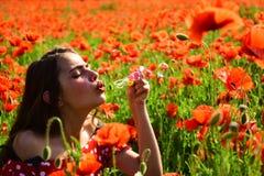 Papavero, giornata della memoria, Anzac Day immagine stock