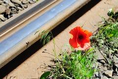 Papavero rosso selvatico vicino alla ferrovia Immagini Stock Libere da Diritti