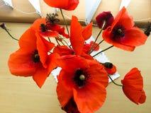 Papavero rosso su una tavola Immagine Stock