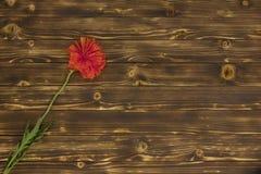Papavero su un fondo di legno Immagini Stock