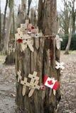 Papavers bij een boom met de gebieden van prikkeldraadvlaanderen Stock Afbeeldingen