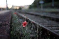 Papavers dicht bij de spoorweg Royalty-vrije Stock Fotografie