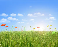 Papavers en paardebloemgebied, blauwe hemel en zon Royalty-vrije Stock Foto's
