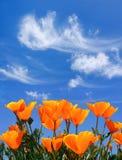 Papavers en Wolken Stock Afbeelding