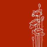 Papavers na regen Royalty-vrije Stock Afbeelding