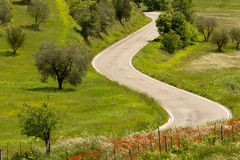 Papaverskant van de weg in Toscanië Stock Afbeelding