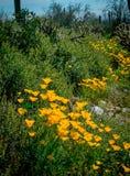 Papaverweg hoewel de cactussen royalty-vrije stock foto