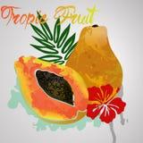 Papaya με τον παφλασμό χρώματος και το τροπικό φύλλο Στοκ εικόνες με δικαίωμα ελεύθερης χρήσης