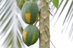 papaya Imagem de Stock Royalty Free
