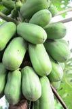 Papaya Lizenzfreies Stockbild