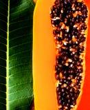 Papaya Royaltyfri Bild