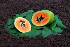 papaya Imagem de Stock Royalty Free