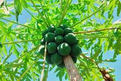 papaya στοκ φωτογραφίες με δικαίωμα ελεύθερης χρήσης
