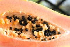 Papaya Carica papaya is an exotic, tasty, sweet fruit. Fruit of melon bread tree. Papaya seeds are edible and can be a cure. royalty free stock image
