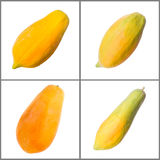 Papaya collection Stock Image