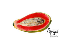 Papaya Cut.Hand drawn watercolor painting on white background Stock Image
