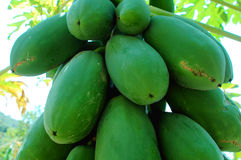 Papaya fruits royalty free stock photo