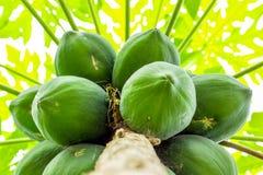 Papaya Fruits Cluster Royalty Free Stock Photos