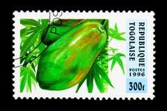 Papaya fruktserie, circa 1996 Arkivfoto