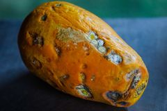 Papaya is going to be rotten. stock photography