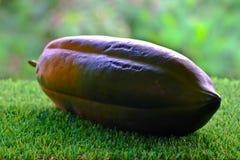 Papaya happy on green grass. Papaya happy resting on a green lawn Royalty Free Stock Photo