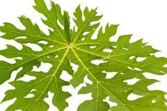 Papaya Leaf Stock Photos