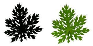Papaya leaf Silhouette Stock Photo