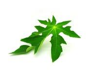 Papaya leaves Royalty Free Stock Image