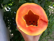 Papaya Perfection. Beautiful Papaya Perfection! Star shaped and delicious stock photos